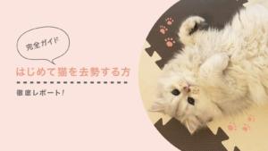 【完全ガイド】はじめて猫を去勢する方へ、術前検査から去勢手術〜抜糸まで徹底レポート
