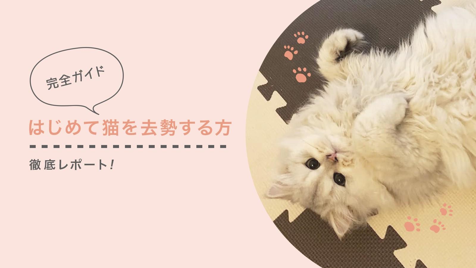 猫 避妊 手術 抜糸