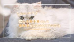 猫の去勢手術をして補助金を受け取るまでの流れを、完全レポートしました!