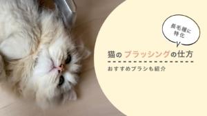 【長毛種に特化】猫のブラッシングの仕方|おすすめブラシも紹介【画像あり】