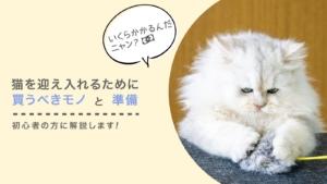 【初心者の方へ】猫を迎え入れるために買うべきモノと準備を完全解説!かかる費用も解説します!