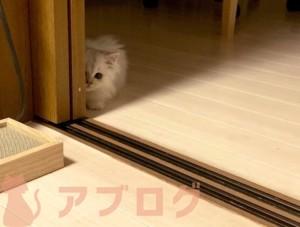【初心者必見】猫を迎える初日の準備と、迎えるとき気をつけるポイントを、徹底解説しました!