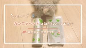 【猫の除菌・消臭スプレー】カンファペットは効かないって本当!?公式サイトから実際に購入してみたレビ...